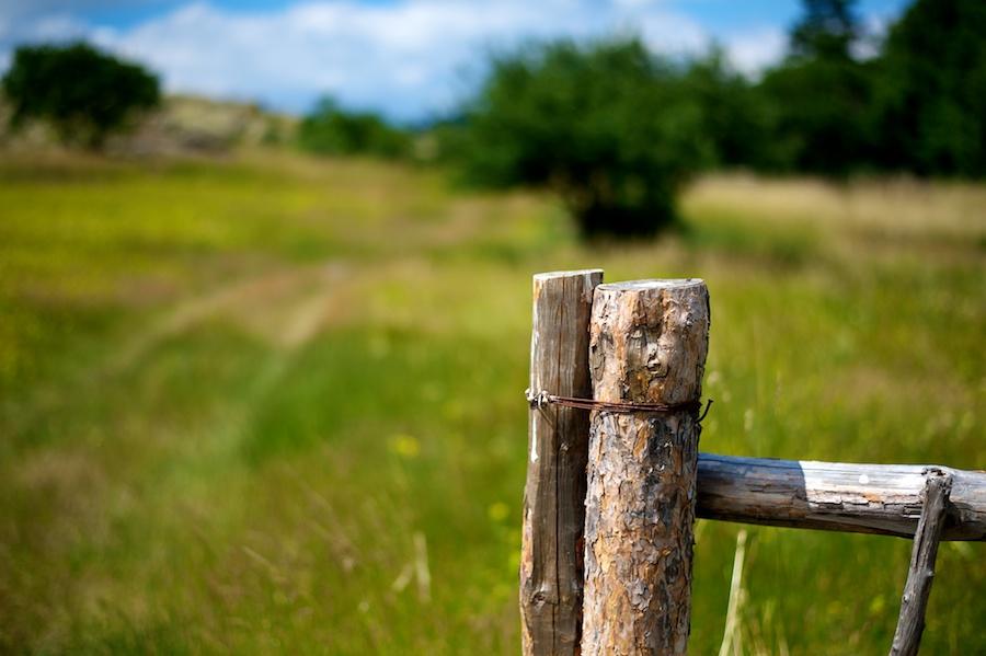 Детайл от ограда в природен парк Сините камъни край Сливен - Nikon D700 | AF-S Nikkor 50/1.8G @f/1.8